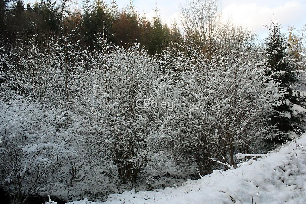 Winter Trees - Glenabo Woods, Cork, Ireland by CFoley