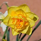 Daffy With a Bug by Penny Smith