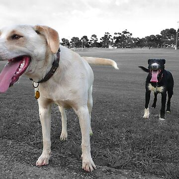 Two brothers on the footy oval. by jembot