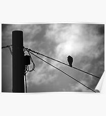 Bird on a wire - Aussie style Poster