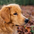 Golden Retriever by Happy Dog Swag