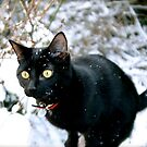 Ichabod in the snow by Richard Pitman