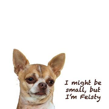 Feisty Chihuahua by sruhs