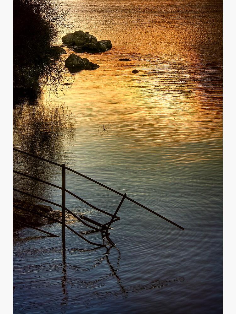 Arklet Light by Shuggie