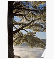 Crystal leaved Pine Poster