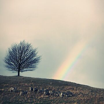 Chasing rainbows and counting sheep. Same thing really. by LAZYJSTUDIOS