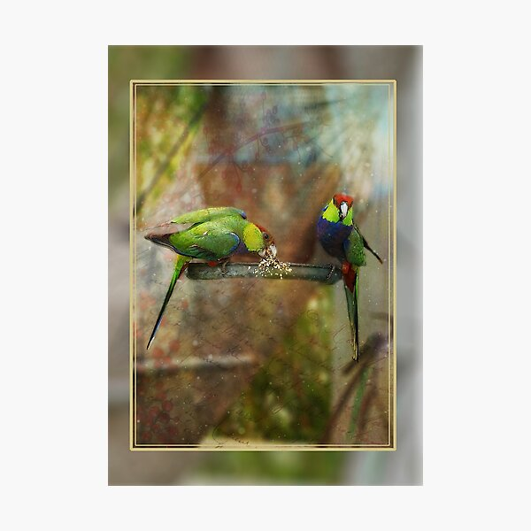 Red Capped Parrots Photographic Print