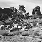 Navajo Churro Sheep by Susan Chandler