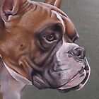 Boxer by Holley-Ryan