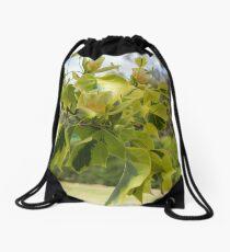 Tulipfera Tree (Liriodendron Tulipifera 'Aureomarginatum') Drawstring Bag