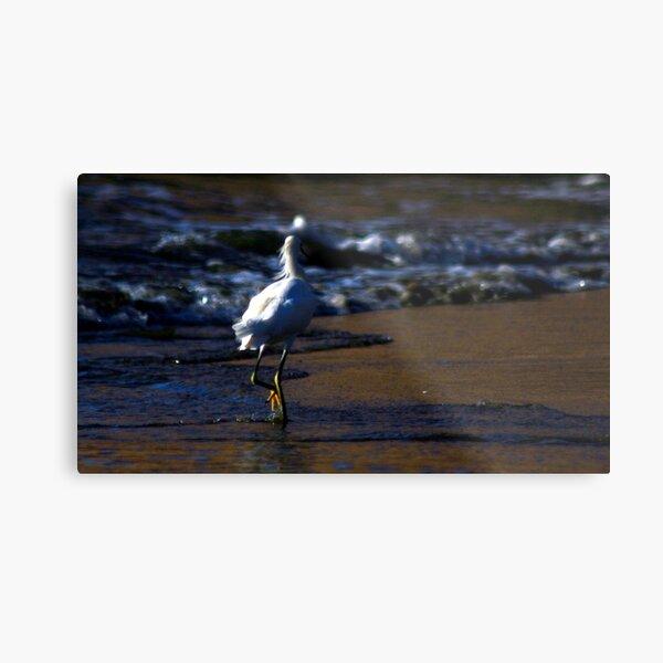 ibis strolling the waves photo by CheyAnne Sexton Metal Print