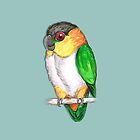 Black headed caique by Bwiselizzy