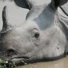 Assam one-horned rhinoceros by Denzil