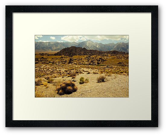 Barrel Cactus, Alabama Hills by Justin Mair