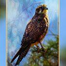 Eagle by JuliaKHarwood