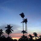 palmtrees kohlanta by Heisenberg1904