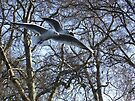 Two seaguls over my head von Themis