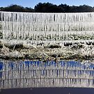 Frozen fence by David Lee Thompson