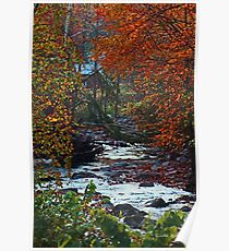 Autumn at the Creek in the Woods Poster