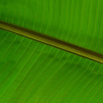 A Small Part of a Big Leaf by imaginethis