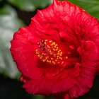 Beautiful Bright Macro Photograph of a Red Hibiscus Flower by Jon Shore