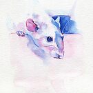 The100RatProject 090 by Anaïs Chesnoy