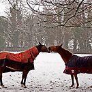 Snowy Horse Kiss by NeilAlderney