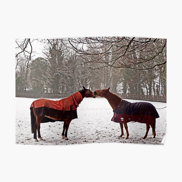 Snowy Horse Kiss Poster