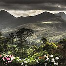 Tallebudgera Valley by Murray Swift