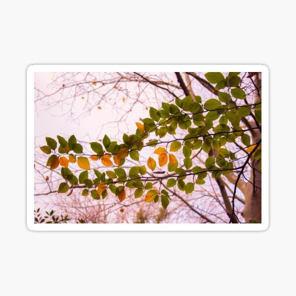 wonderful tree branch Sticker