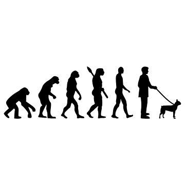 Boston terrier evolution  by Designzz