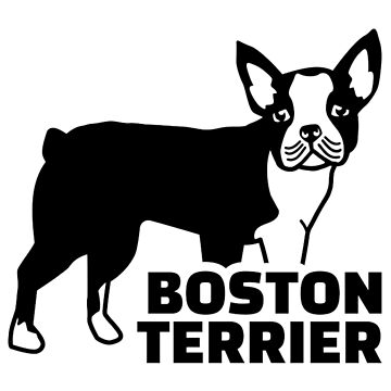 Boston terrier real by Designzz