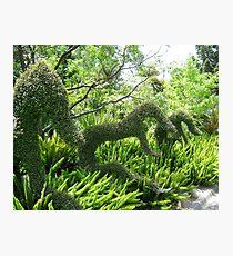 Topiary Photographic Print