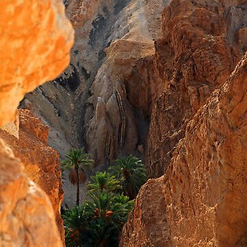 Desert oasis by diktattoor