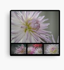 A Study in Lilac Canvas Print