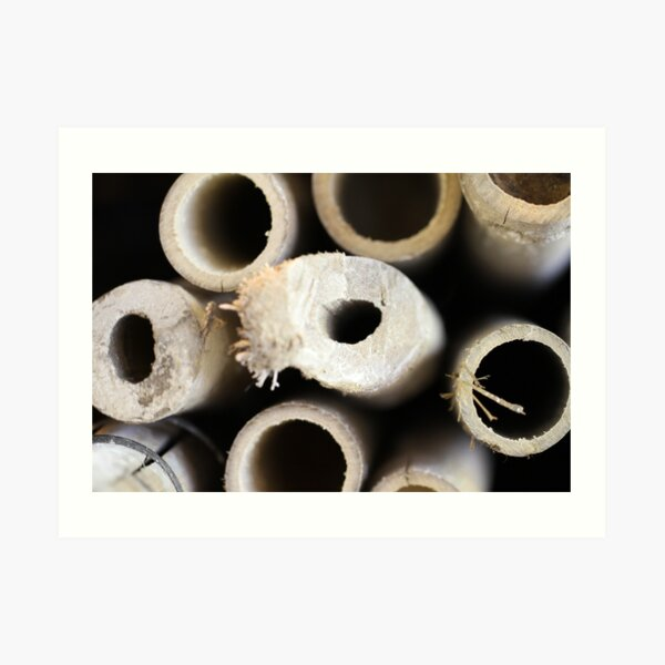 Object: Cross section of Bamboos Art Print