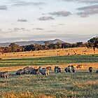 Lazy Evening Grazing by Harry Oldmeadow