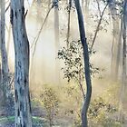 Bush Morning by Harry Oldmeadow