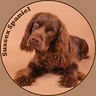 Sussex Spaniel by SMiddlebrook
