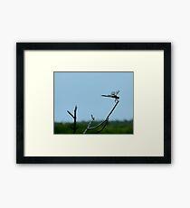 Dragon Flies Framed Print