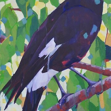 Currawong by depicture