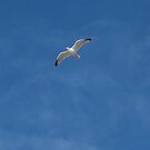 seagull by millymuso