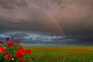 Poppy Fields by Igor Zenin