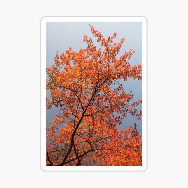 Autumn Contrast Sticker