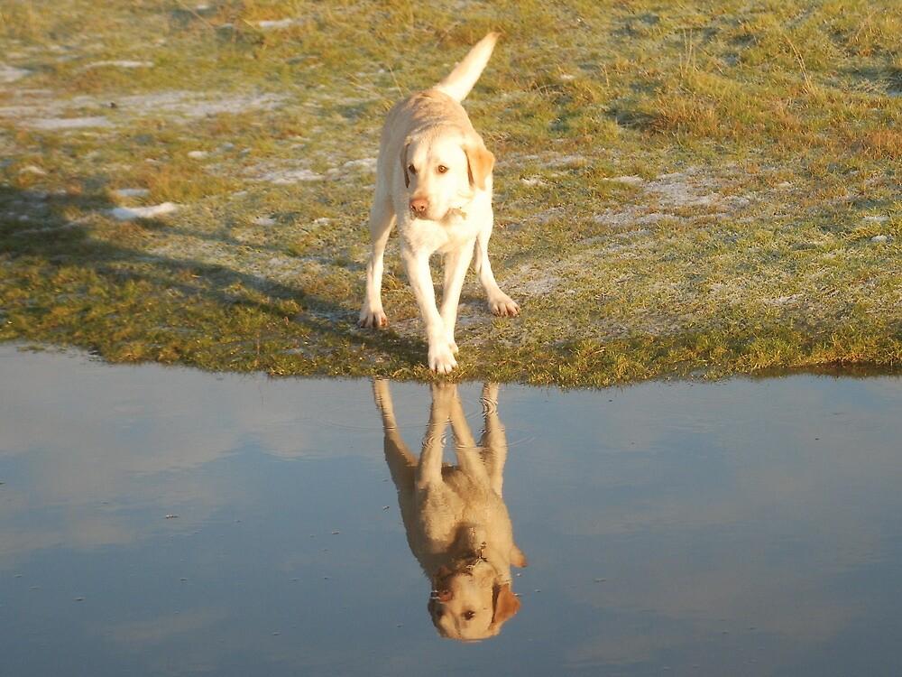 Mirror Image! by Maddie