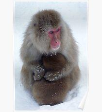 Snow monkeys, Jigokudani Poster