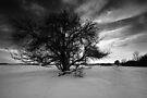 The Old Plum Tree BW by Andy Freer