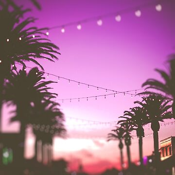 Row of Palms by CaliforniaPhoto