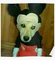 cursed image of doge in costume :( Poster