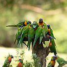 Rainbow Lorikeets by SusanAdey